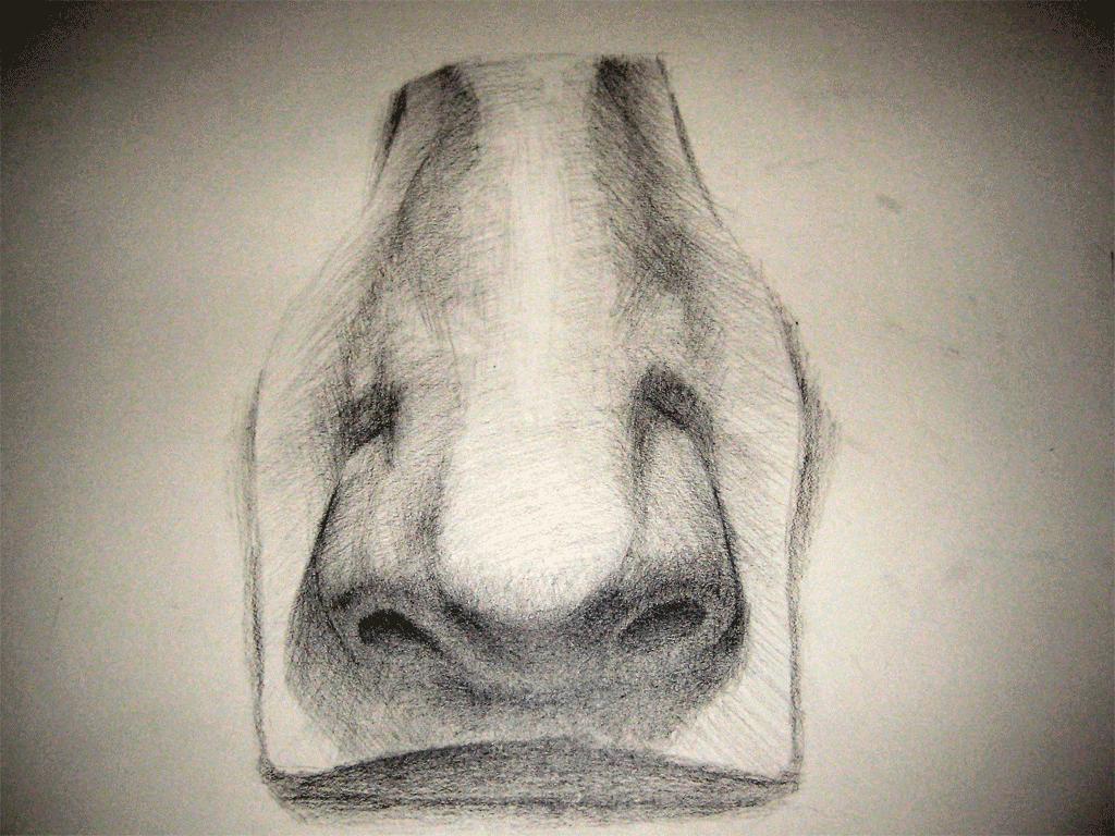 nose-20090131-final-web